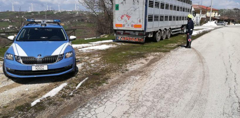 Oltre 200 agnelli ammassati sul tir: trasportatore denunciato per maltrattamento animali