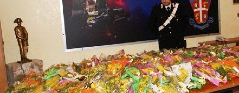 Venditori abusivi di mimose, maxi sequestro da parte dei Carabinieri