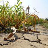 Siccità in Campania, il Ministero riconosce lo stato di calamità