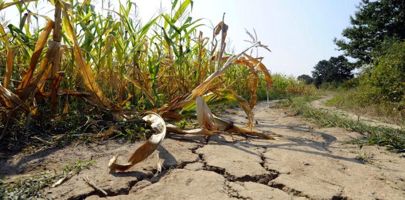 Siccità e grandinate: è allarme agricoltura in Irpinia