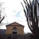 """Giornata Internazionale delle Foreste """"urbane"""": dossier sul Tiglio del Soccorso e i Monumenti Verdi della Valle Solofrana"""
