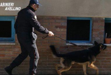 """Il cane """"Attila"""" flagello degli spacciatori: arrestato un ventenne"""