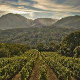 Enogastronomia, destinazione Irpinia con le strade del vino di IWT