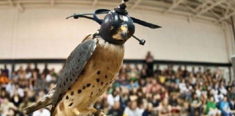 Animalisti contro l'utilizzo della falconeria come strumento di educazione ambientale