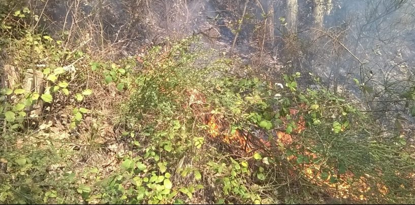 A fuoco due castagneti, con il caldo torna l'incubo incendi