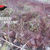 Catturava volatini di specie protetta: denunciato 35enne di Moschiano