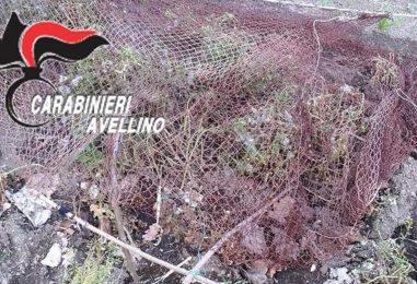 Catturava volatili di specie protetta: denunciato 35enne di Moschiano