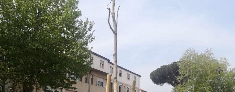 """Quattro nuovi platani lungo Viale Italia, Penna: """"Il mio ultimo regalo alla città"""""""