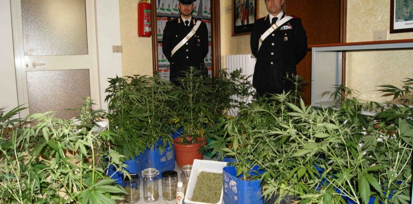 Scoperte 30 piante di marijuana in un casolare di campagna: due denunce