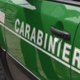 Furto di legna: 20enne denunciato dai Carabinieri Forestali