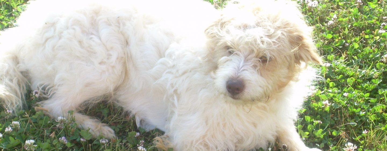 Lascia un milione di euro in eredità al suo cane, gli aveva salvato la vita