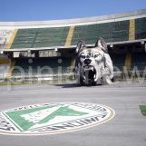 Avellino-Anzio, pericolo scampato: si gioca al Partenio-Lombardi