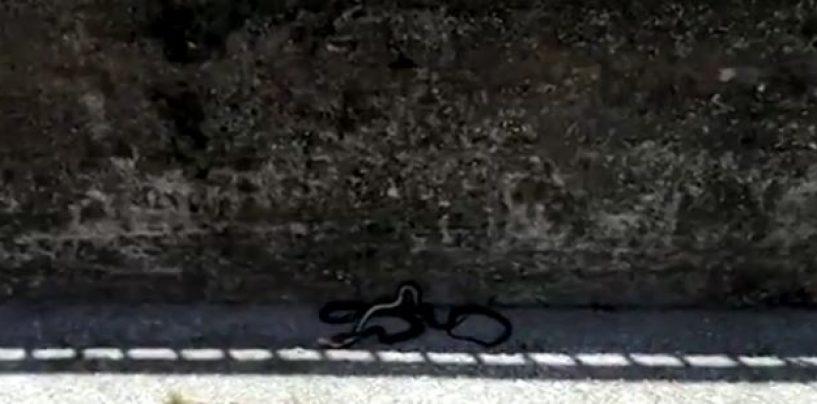 Emergenza topi e serpenti in città: periferie invase, avellinesi esasperati