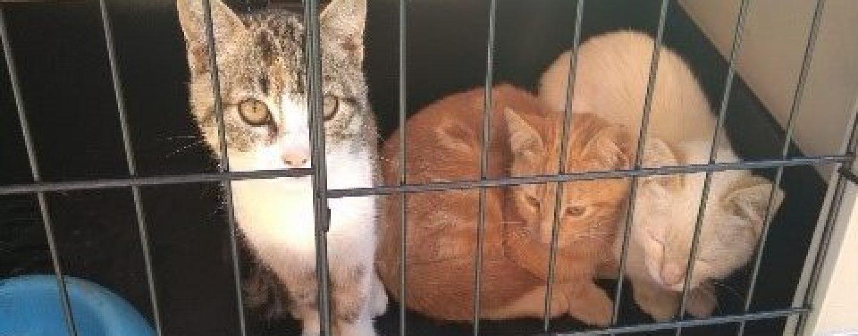 La Gadit mette in salvo tre gattini, si cercano nuovi padroni