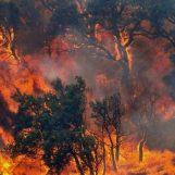 Appicca il fuoco nel suo uliveto e causa un rogo: nei guai un 70enne