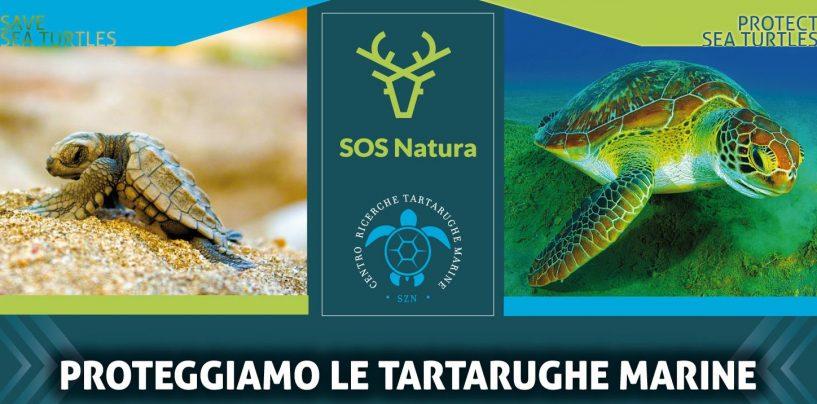 """""""Proteggiamo le tartarughe marine"""": l'evento ad Avellino"""
