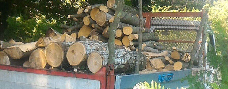 Abbattevano alberi nel Parco del Partenio: un arresto e due denunce. Sequestrati 80 quintali di legna