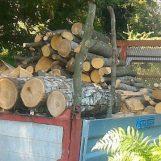 Rubano legna dal Parco dei Monti Picentini: due denunce a Serino