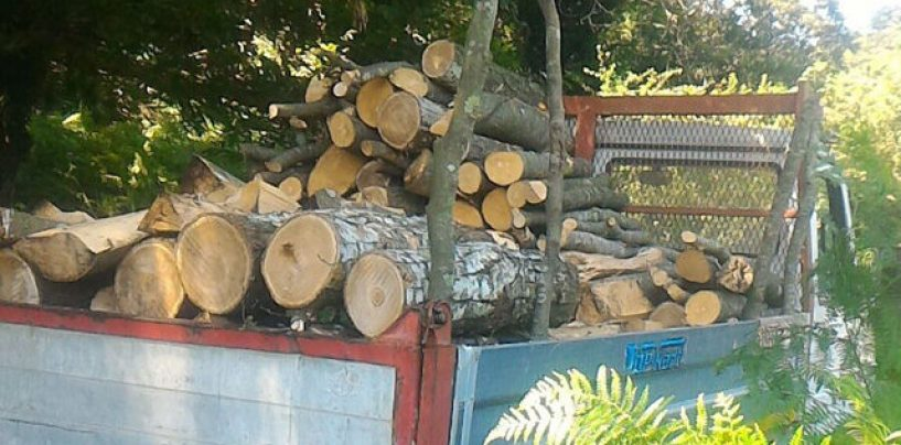 Furto di legna, denunciate due persone
