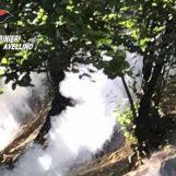 Roghi, altri quattro agricoltori nei guai in Irpinia