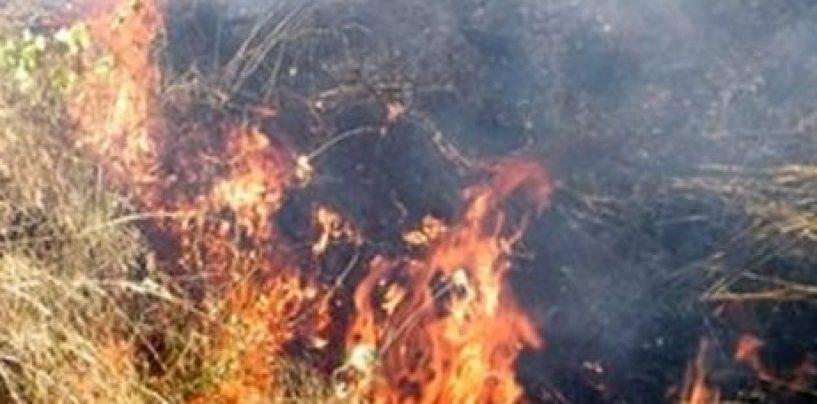 Anziano dà fuoco a rifiuti vegetali e causa un incendio tra gli uliveti: deferito