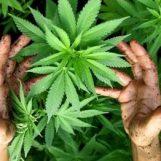 Movida con hashish e marijuana in Alta Irpinia: segnalate 4 persone