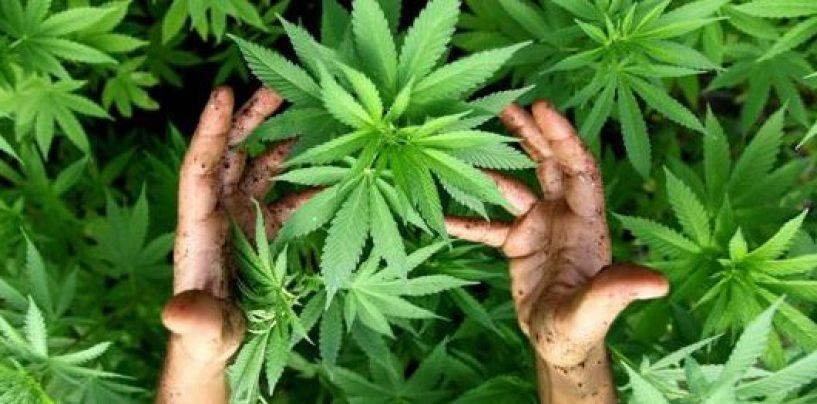 Sorpreso in possesso di marijuana: 25enne nei guai