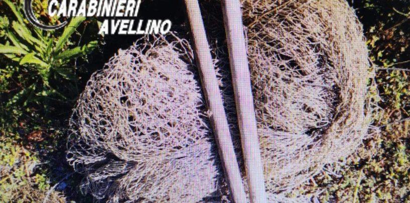 Beccato a catturare uccelli con reti a maglie strette e richiami vivi: denunciato 70enne