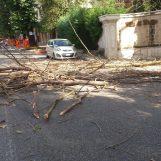 """Raffiche di vento, cadono rami e alberi in via Tagliamento. Il racconto di un'automobilista: """"Ho avuto paura"""""""