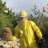Invasione di vespe e calabroni: interventi di bonifica a raffica