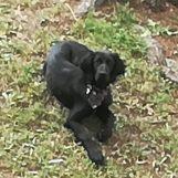 Smarrito Jago, l'appello dei proprietari per ritrovare il loro cane