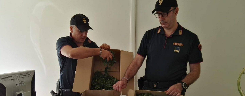 Litiga con l'ex moglie, arriva la polizia e trova 5 chili di marijuana