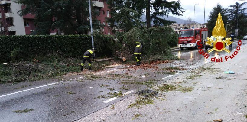 Raffiche di vento in Irpinia: albero pericolante, evacuata un'abitazione