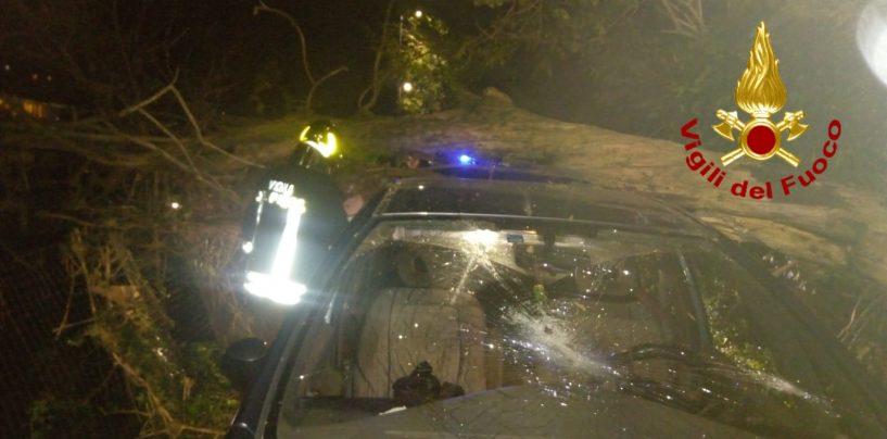 Cade un albero a Rione Parco, paura per un uomo rimasto incastrato nell'auto