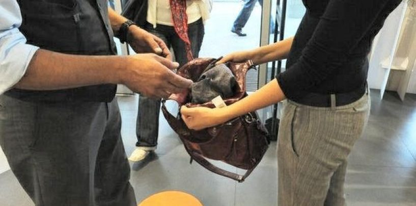 Rubano vestiti nascondendoli nelle borse: beccate ladre in trasferta da Salerno
