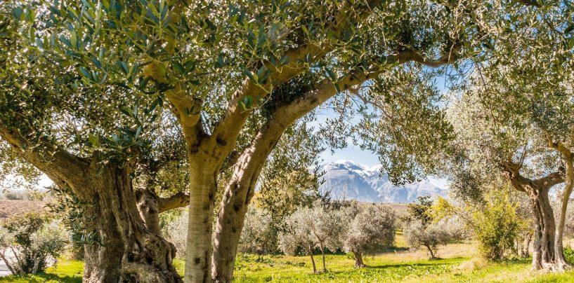 Dramma ad Ariano: agricoltore cade da un albero e muore