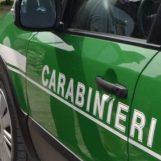 Ciclomotori senza targa: doppio sequestro dei Carabinieri del Gruppo Forestale
