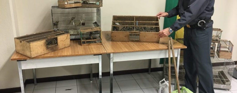 Detenzione illegale di fauna selvatica protetta: scatta la denuncia per un avellinese