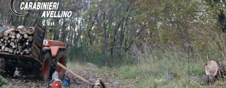 Rubava legna in un fondo privato: 30enne denunciato
