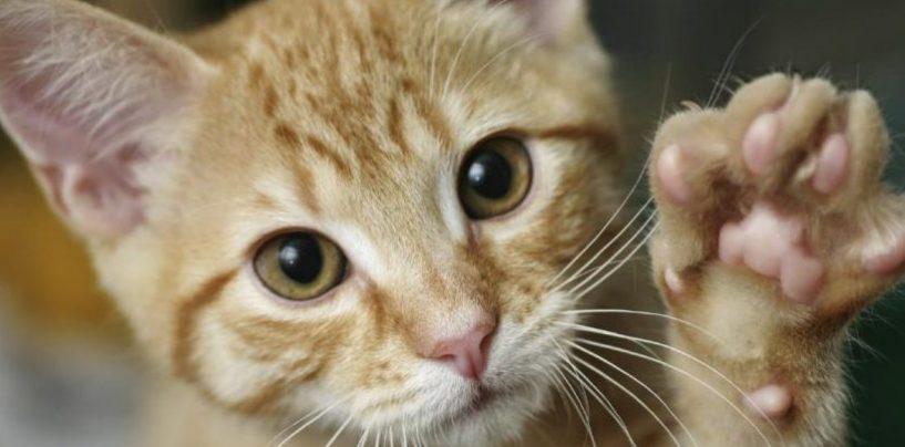 """Gatti feriti, l'appello della Gadit ai cacciatori: """"Non sparate in prossimità di abitazioni"""""""