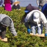 Formazione in agricoltura: allo Sprar di Sant'Angelo a Scala la prima lezione di potatura