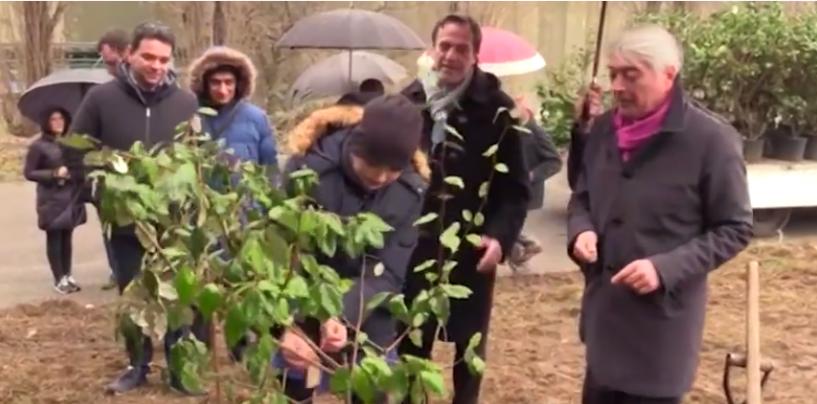 Stir di Avellino primo in Campania senza ecoballe: al loro posto 50 Olivastri di Boemia