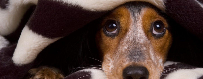 Verso una società antispecista, animalisti e 5stelle contro ogni forma di violenza