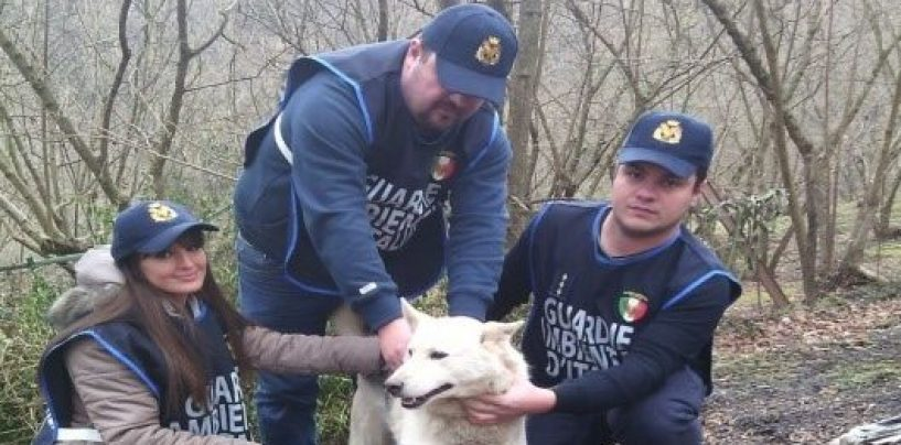 Le Guardie Gadit salvano un cane finito in un dirupo