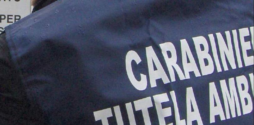 """""""Terra dei Fuochi"""", il blitz dei carabinieri: 17 imprenditori denunciati e 2 milioni di euro sequestrati"""