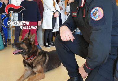Il cane Pirat in Pediatria, gli auguri dei Carabinieri ai bambini del Moscati