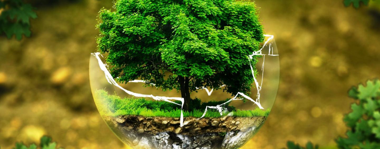 """""""Adesso piantamola"""": allo Stir 50 olivastri di Boemia"""