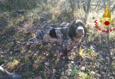 Cane da caccia cade in un dirupo di 50 metri: salvato dai Vigili del Fuoco