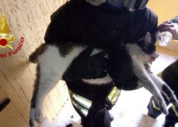 FOTO/ Appartamento in fiamme a Montoro: i caschi rossi salvano anche un gattino