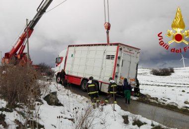 Camion carico di maiali finisce fuori strada a Bisaccia: i caschi rossi mettono in salvo mezzo e suini